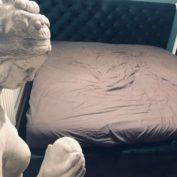 Bett mit Bettkasten Elsa Samt Stauraumbett photo review